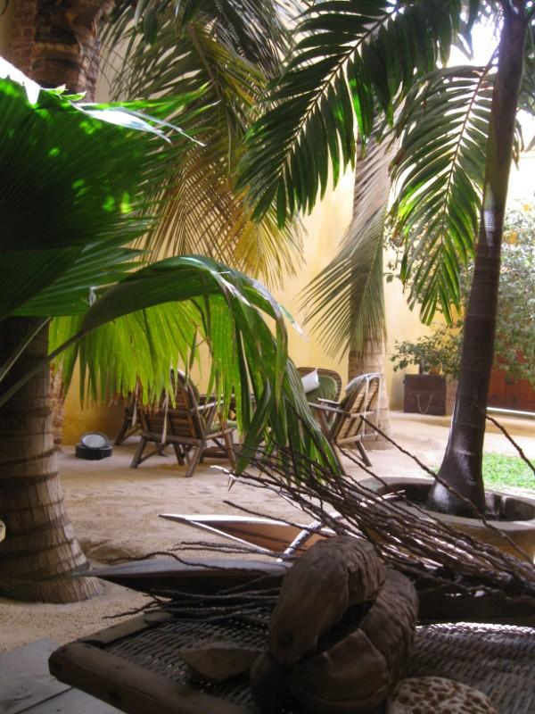 La maison du palmier stunning gestes du quotidien pour un for Palmier factice
