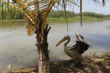 sejours ornithologiques, senegal