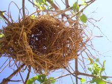 """nids de tisserins guesthouse """"au fil du fleuve"""""""